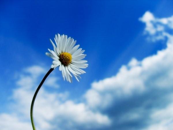 Fotolog de starxstar: Flor